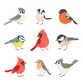 Collection of cute winter birds