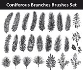 Collection of Evegreen coniferous trees branches silhouettes