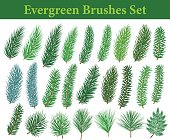 Collection of Evegreen coniferous trees branches