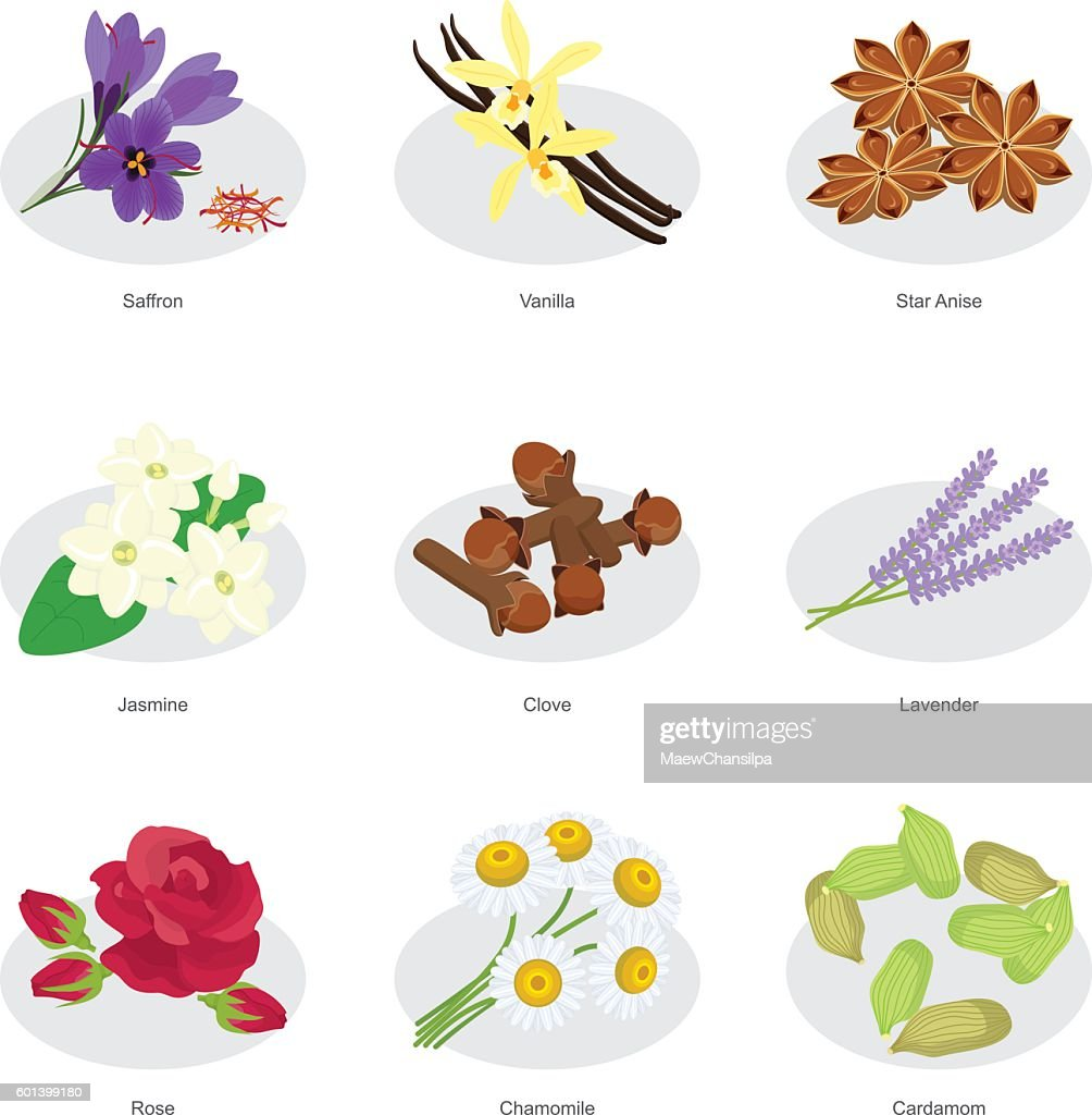 collection of flower herbs