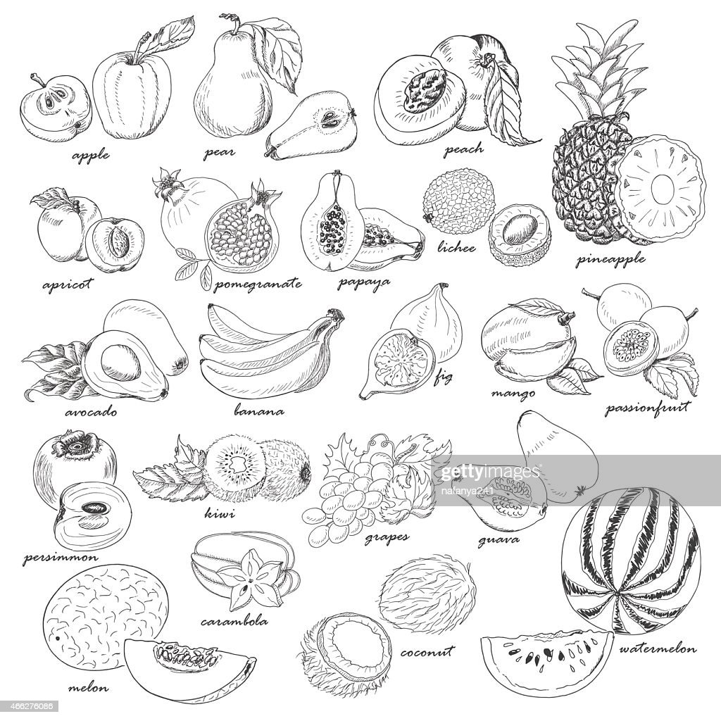 Collection of fruit in sketch style