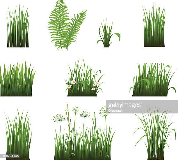 collection of grass - blade of grass stock illustrations