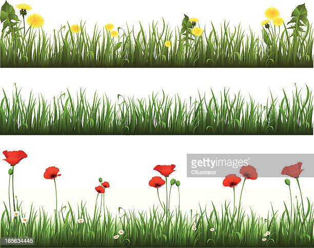 collection of grass with dandelions and poppies - poppy stock illustrations, clip art, cartoons, & icons