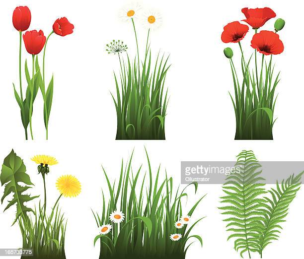 collection of grass with flower - poppy stock illustrations, clip art, cartoons, & icons