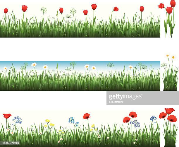 Collection of grass with tulips, camomiles and poppies