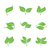 Collection of Green Leaves.