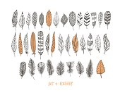 Collection of hand drawn decorative feathers.