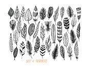 Collection of hand drawn feather.