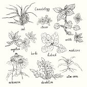 Collection of hand-drawn herbs are also used in cosmetics.