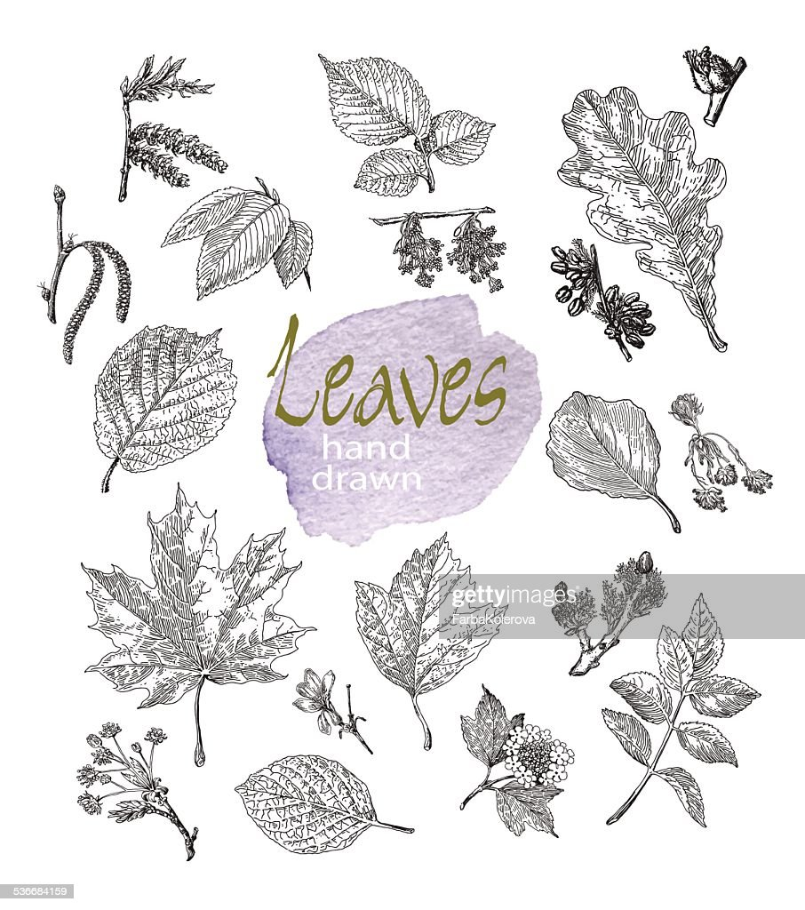 Collection of highly detailed hand drawn leaves and inflorescence  isolated.
