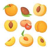 Collection of isolated cut and whole vector peaches. Vector apricot illustration in curtoon style