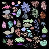 Collection of multicolor Autumn leaf silhouettes, seasonal