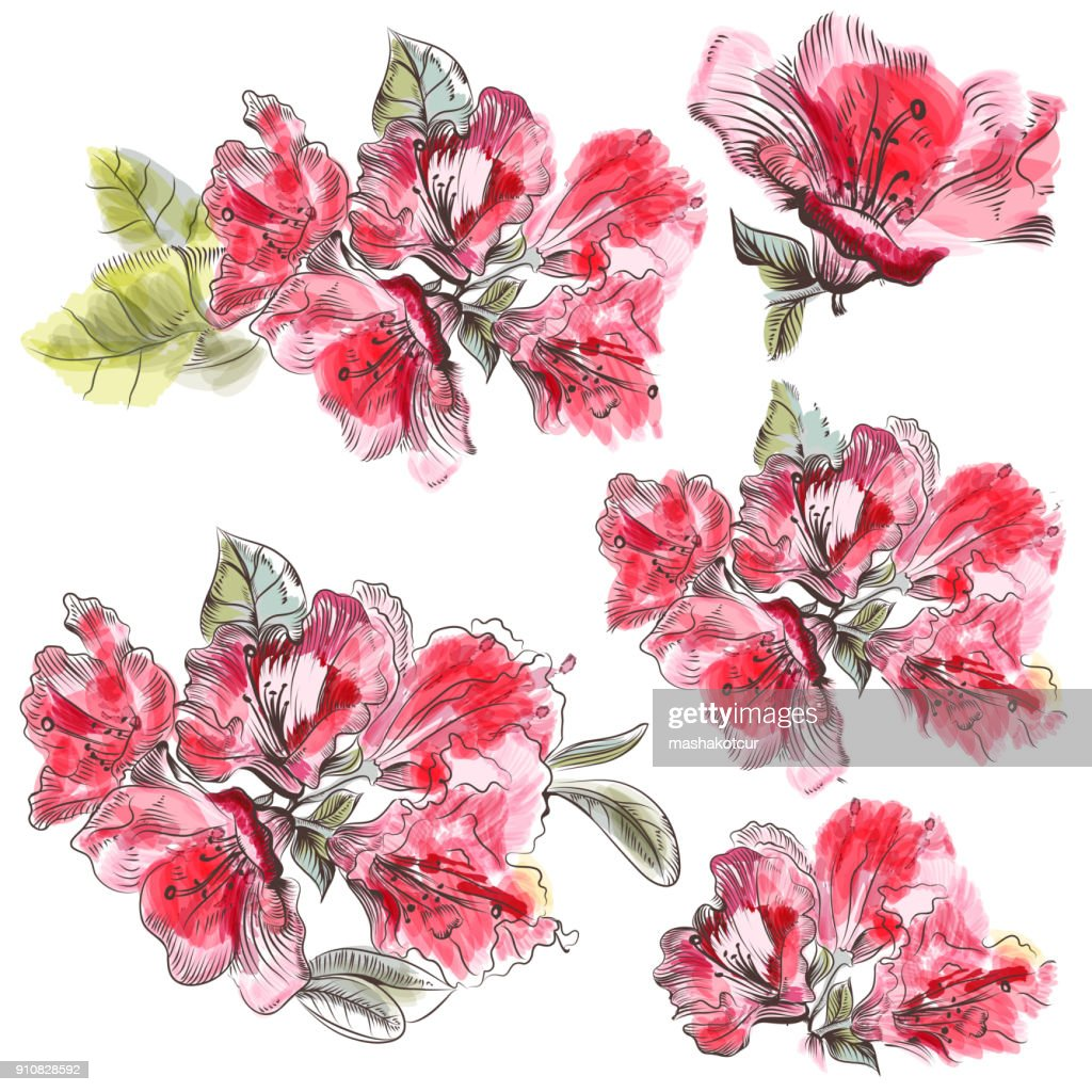 Collection of pink azalea flowers in watercolor style