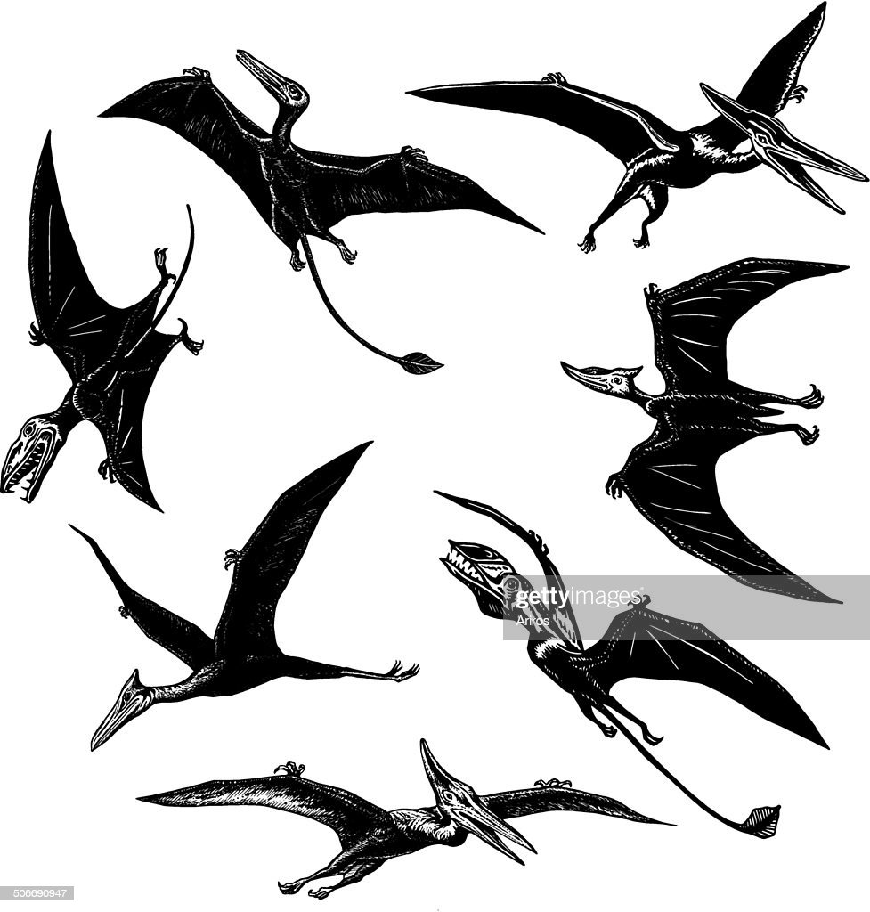 collection of prehistoric flying monsters