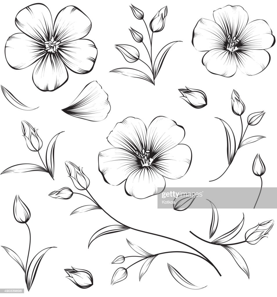 Collection of sakura flowers, set