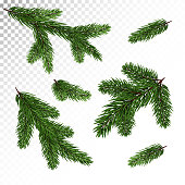 Collection of spruce / pine branches in a realistic style. New Year's decor. Isolated Vector. Eps10.