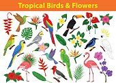Collection of tropical exotic birds, parrots, flowers and leaves