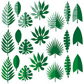 Collection of tropical leaves, vector illustration leafs of areca palm, fan palm, babana, philodendron, monstera, fern