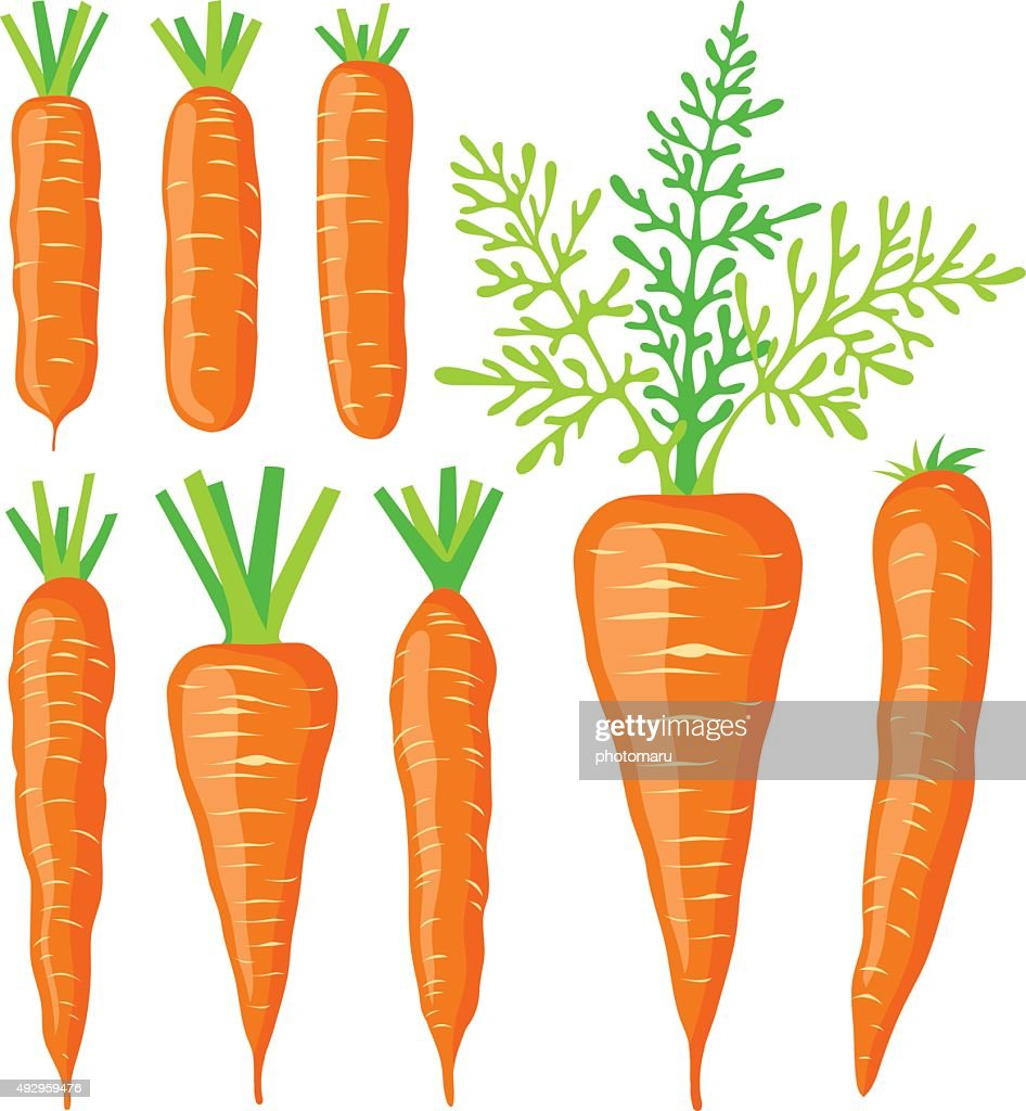 Collection of various carrots, vector illustrations