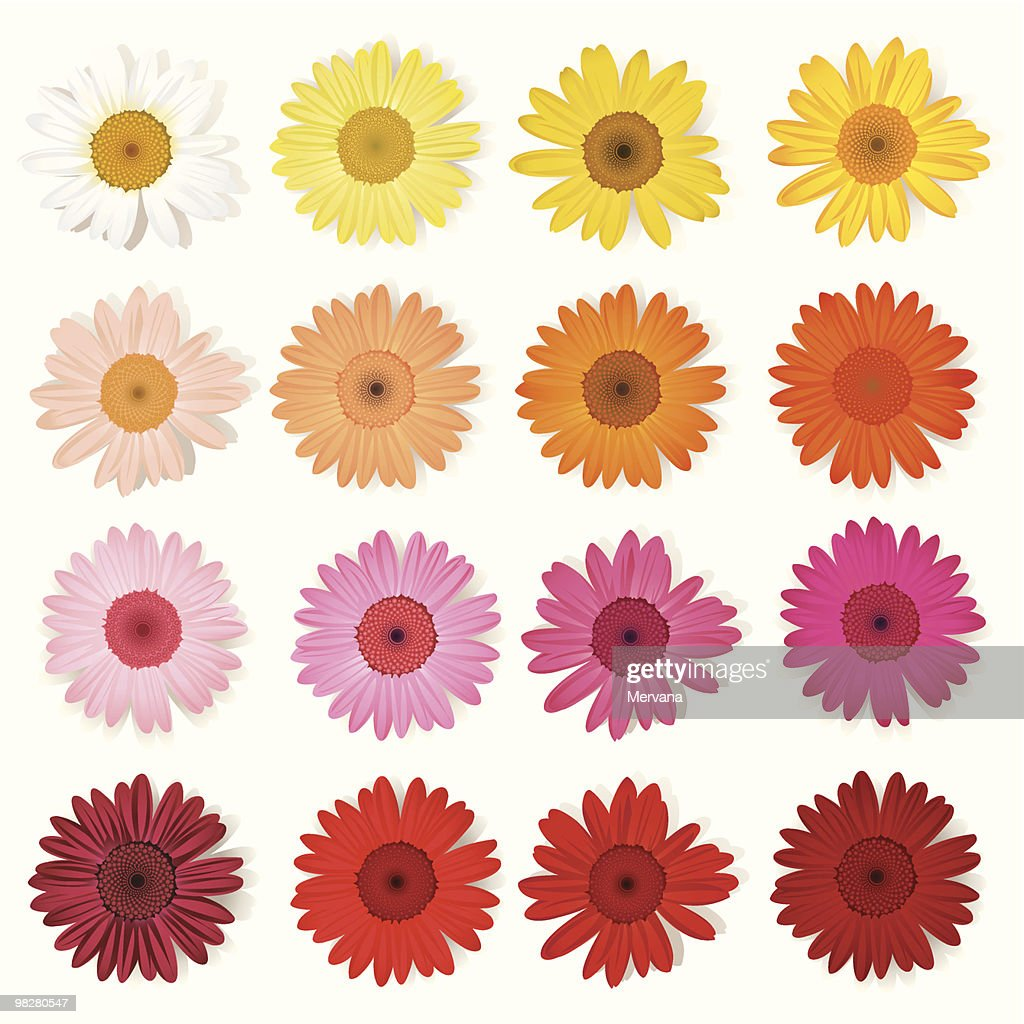 A collection of various colored Gerber daisies