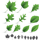 A collection of various types of leaves on white background