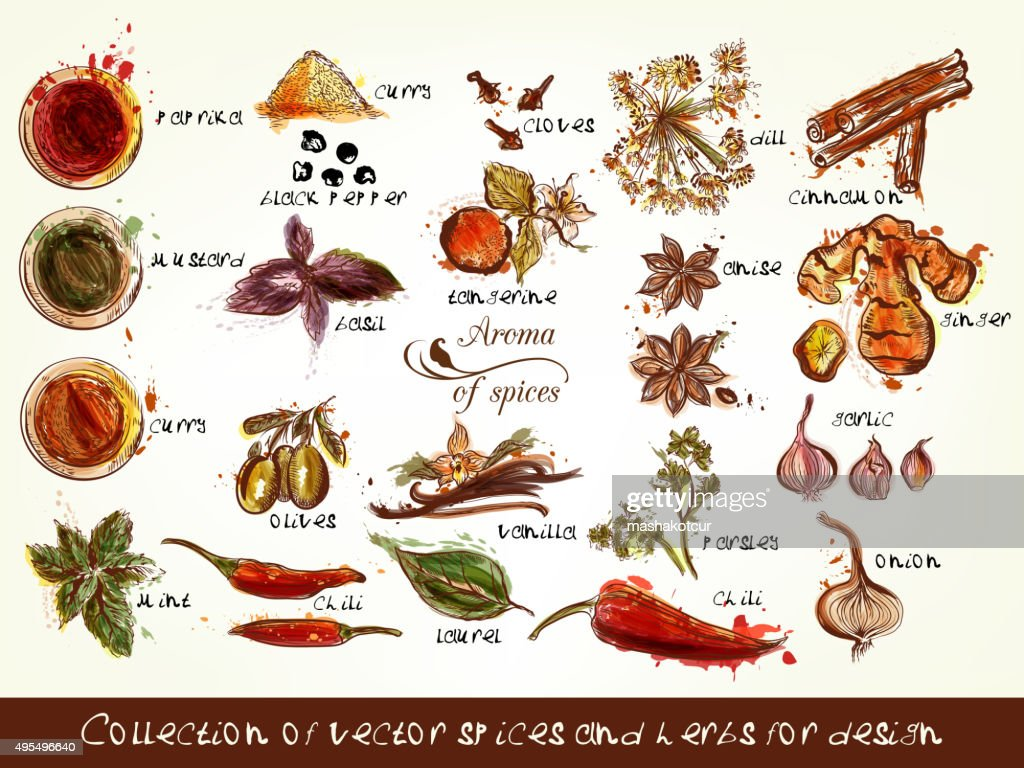 Collection of vector spices and herbs for design
