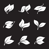 Collection of White Leaves.
