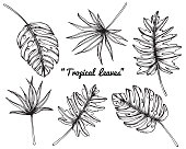Collection set of Tropical leaves by hand drawing and sketch with line-art on white backgrounds.