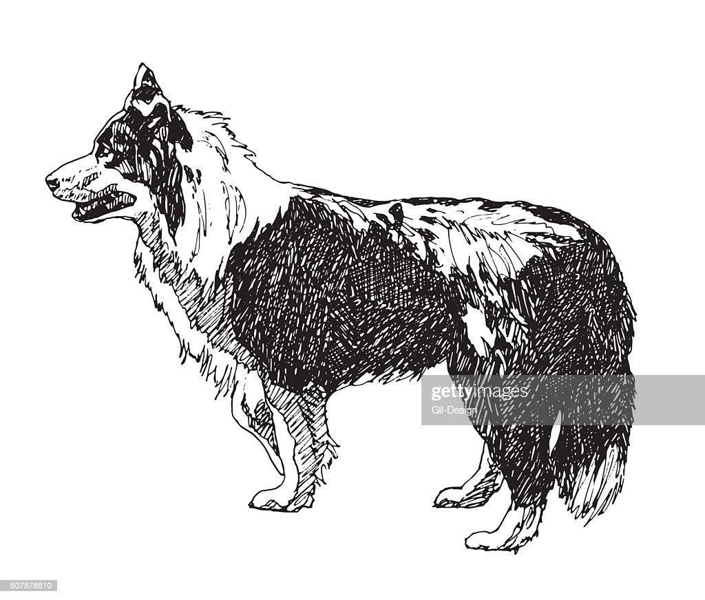 Collie Rough Dog. Vector