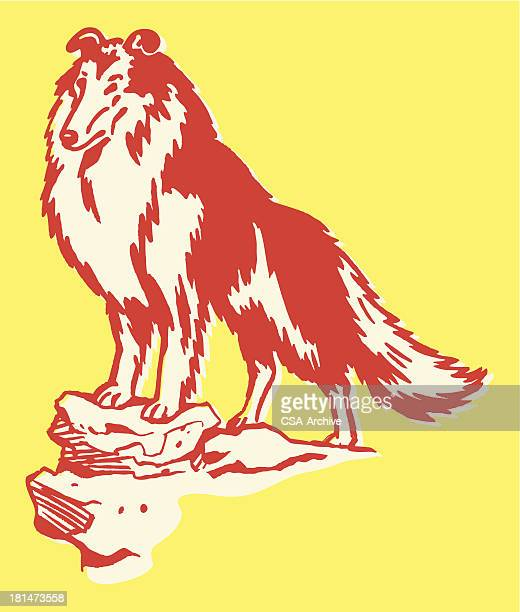 collie standing on a rock - collie stock illustrations