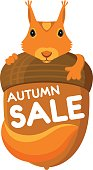 Color banner for the autumn sale with a drawing of a cartoon animal Squirrel, looking out from behind the acorn. Vector, isolated on background, for shopping and discount design.