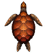 Color cartoon illustration of turtle. The object is separate from the background. Illustration for printing on T-shirts, covers, sketches of tattoos and your design.