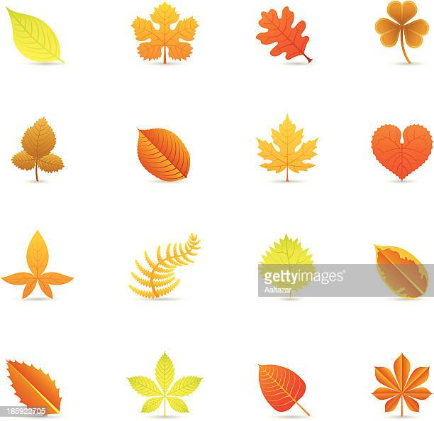 Color Icons - Autumn Leaves