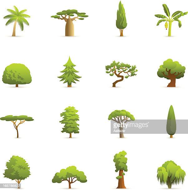 color icons - trees - cypress tree stock illustrations