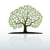 Color Oak Tree