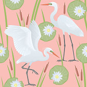 Color set, illustration with two different, detailed drawings, Great Egrets of the Ardea alba species. Vector, isolated on background.