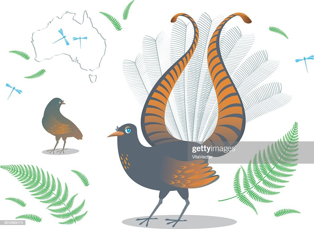 Color vector illustration Lyrebird bird, silhouette of Australia and fern.
