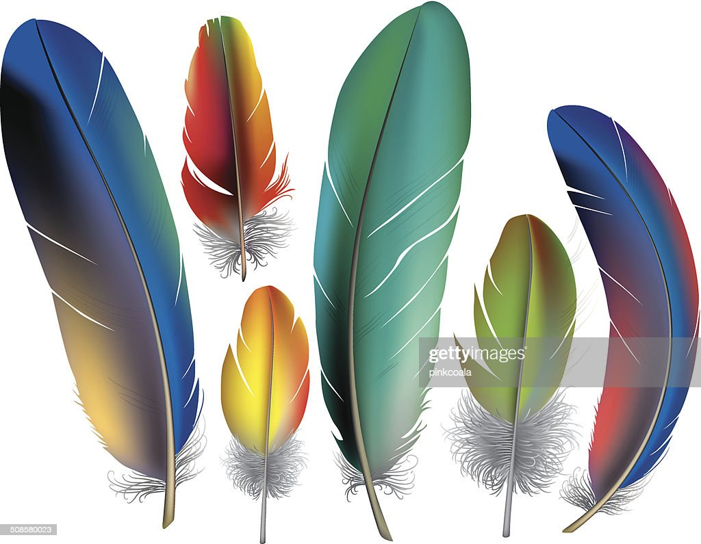 Colored feathers : Vector Art
