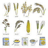 Colored illustrations of cereals. Vector pictures in hand drawn style