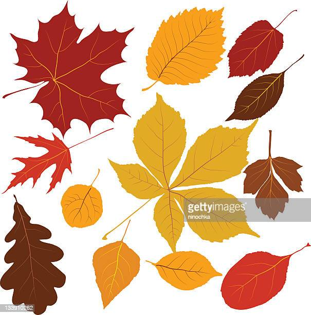 colored leaves - ash stock illustrations, clip art, cartoons, & icons