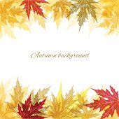 Colored maple leaves. Autumn background. Border.