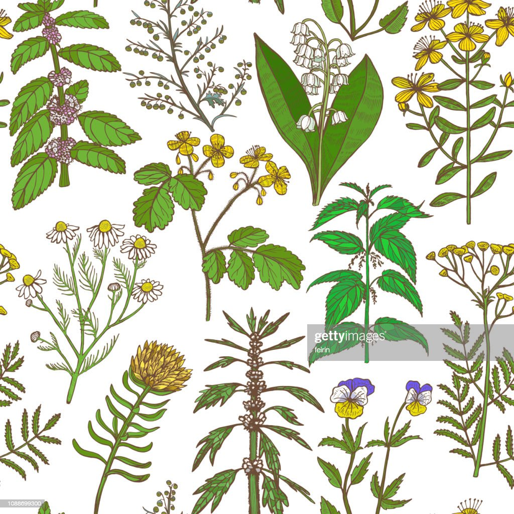 Colored Pattern with Medicinal Plants in Hand-Drawn Style