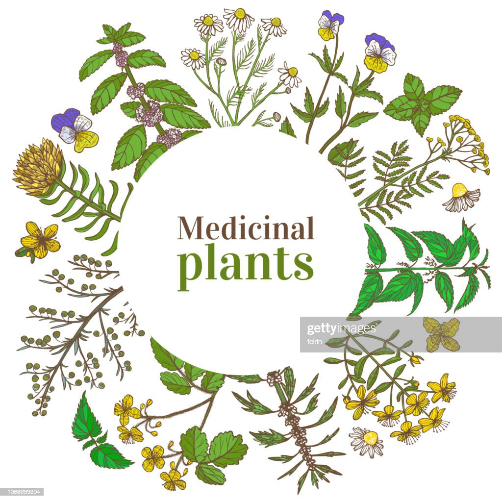 Colored Round Template with Medicinal Plants in Hand-Drawn Style