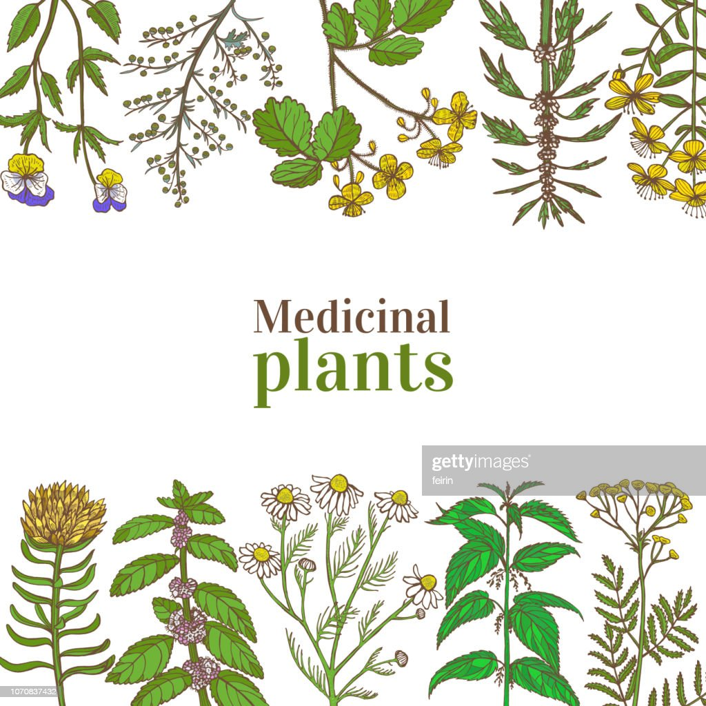 Colored Template with Medicinal Plants in Hand-Drawn Style