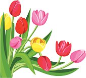 Colored tulips. Vector illustration.