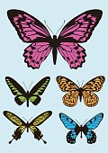 colorful Butterfly design icon set,