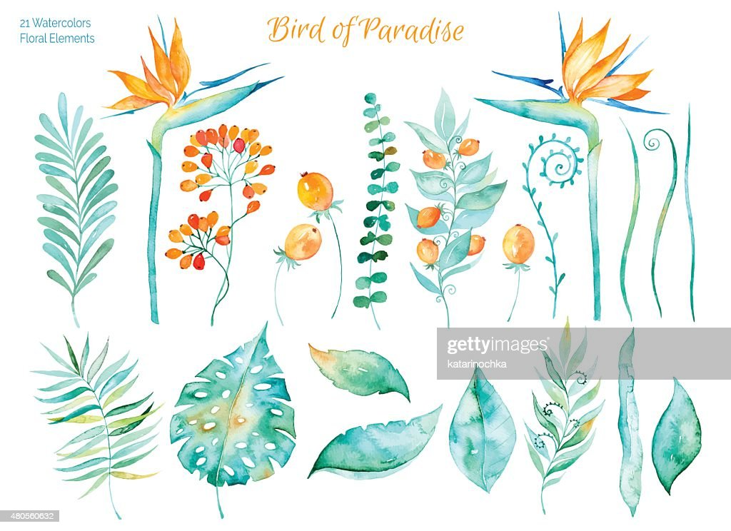 Colorful collection with tropical leaves and flowers of Paradise