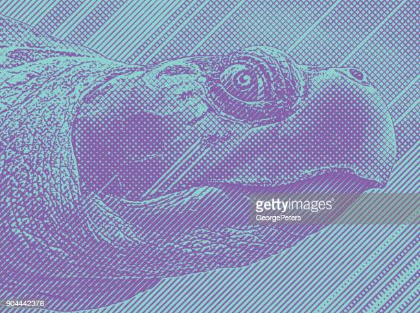 Colorful Engraving of a Sea Turtle head