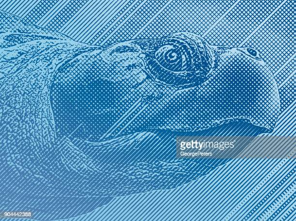 colorful engraving of a sea turtle head - turtle stock illustrations