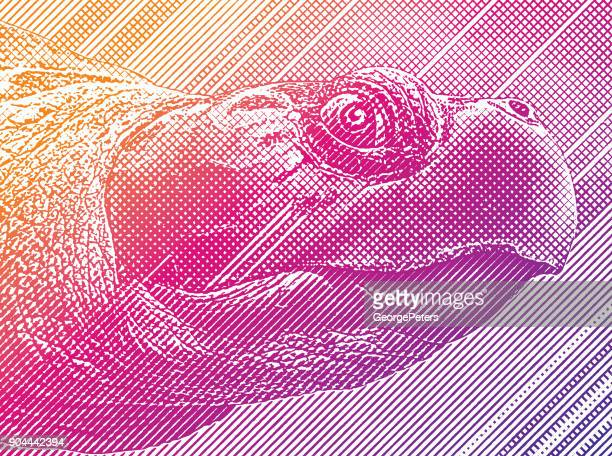 colorful engraving of a sea turtle head - sea turtle stock illustrations